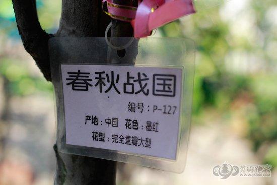 第十四届常熟方塔山茶花展(2)