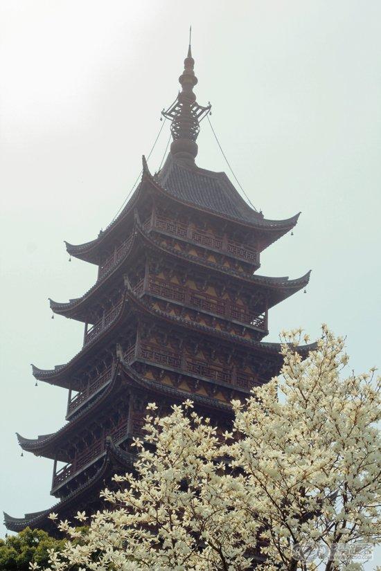 第十四届常熟方塔山茶花展(3)