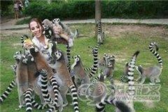 上海野生动物园六一特价招募