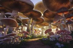 苏州乐园蘑菇街、糖果乐园超值联票