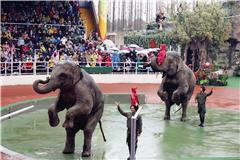【090乐游团】悠然踏青四月天 上海野生动物园走起