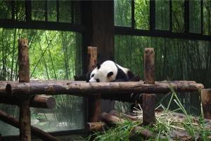 悠然踏青四月天 跟着小编上海野生动物园走起