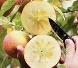 常熟人幫幫他們!百萬斤優質蘋果焦急待售 62歲果農深情告白