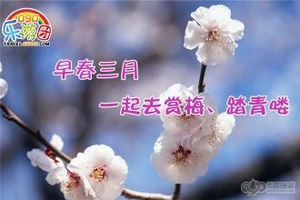 """【090乐游团】早春时光,一起去赏春""""雪""""、游古镇吧"""