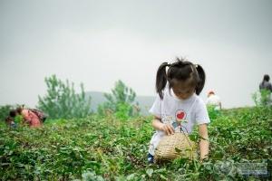 吃河豚品江鲜 游乐场嗨玩 还送你和孩子千亩花田!